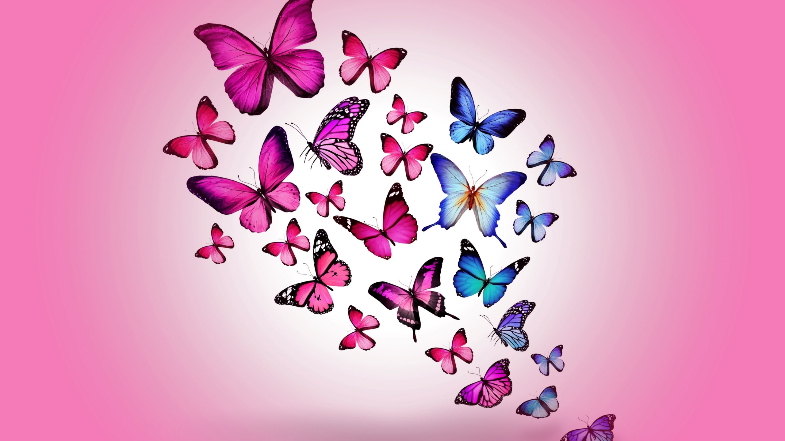 155+ Beautiful Butterfly Wallpaper ideas to consider