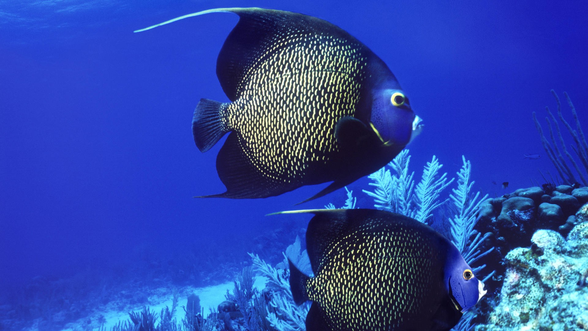 Give 1920×1080 Fish Wallpaper a Thumb for a Healthy Swim