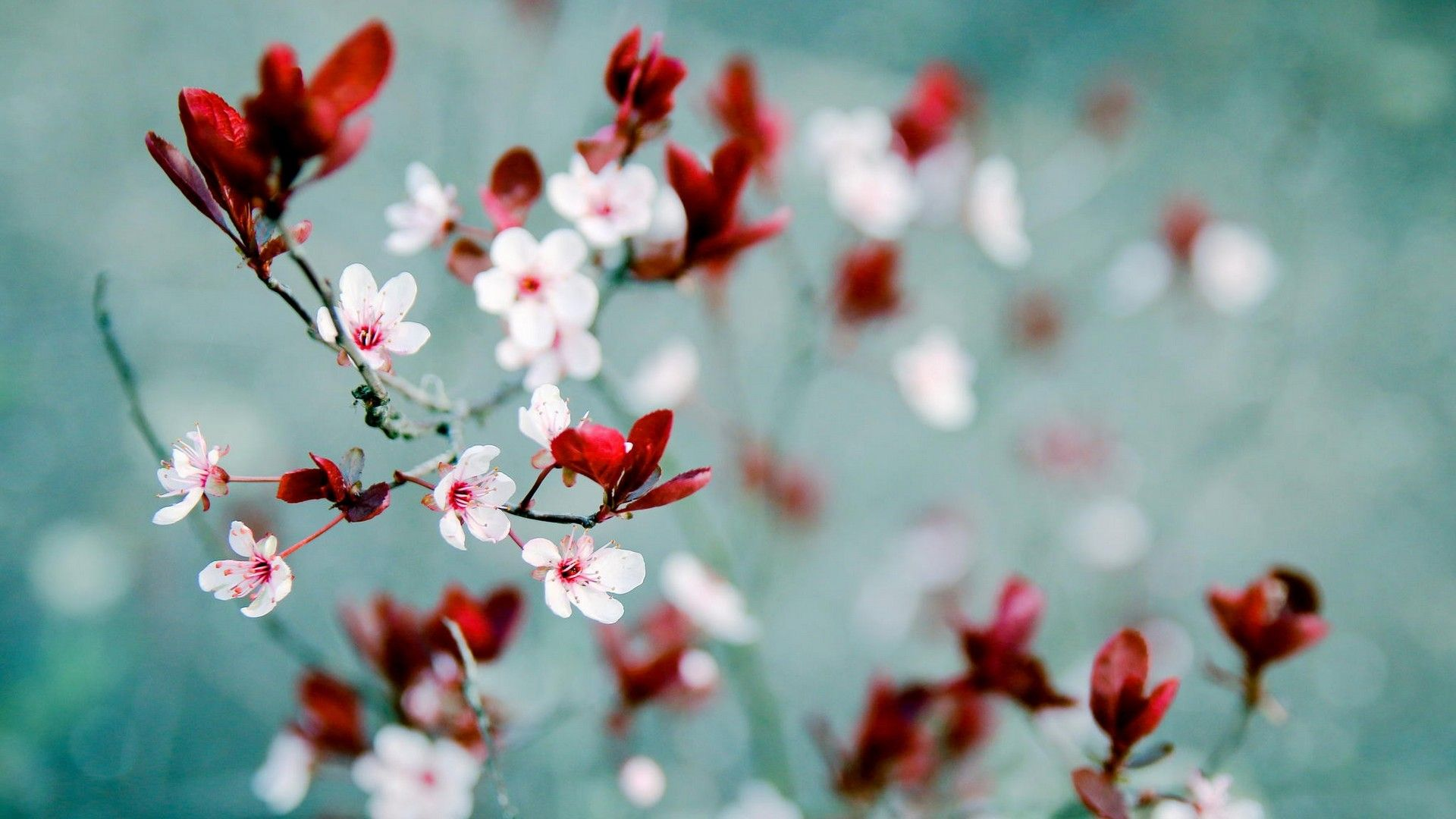 Wonderful Android Spring Wallpaper