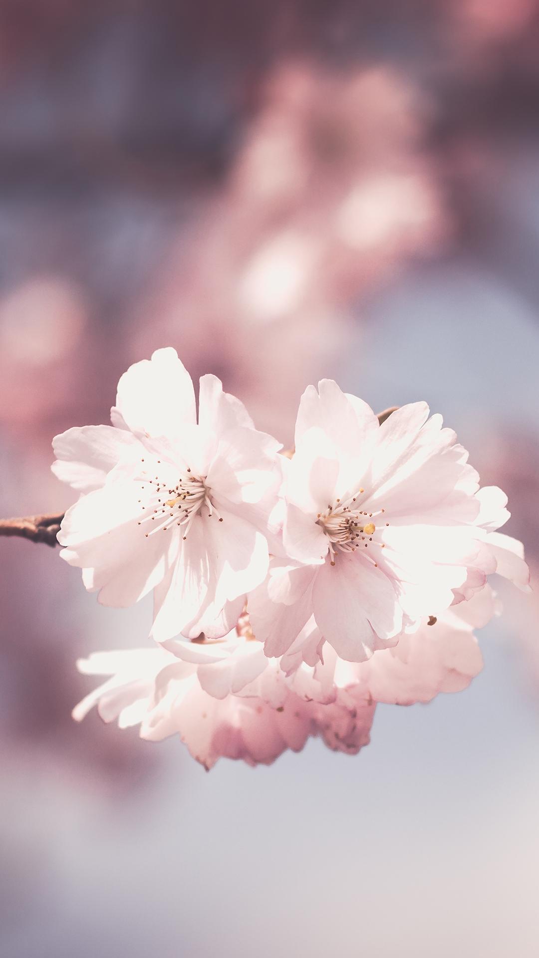 Flower Phone Wallpaper – Top wallpaper Ideas For Smart & Fashionable Cellphones